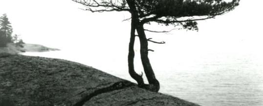 Tkwaans—The Dead Branch
